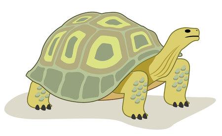 harmless: This reptile turtle Animal kingdom. Illustration