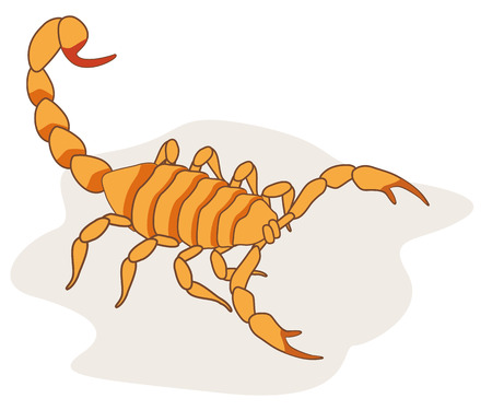 Illustration of scorpion arachnid insect. Ideal for etymology and educational materials Illustration
