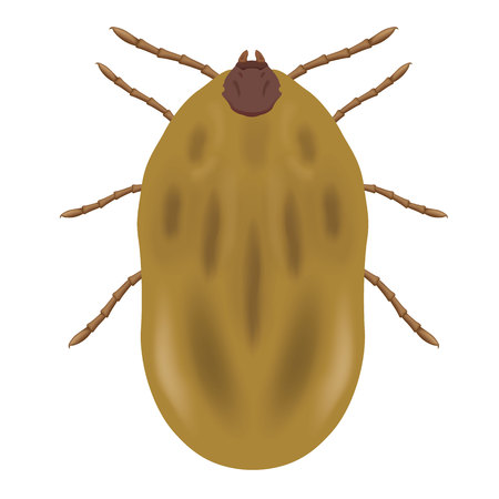 Illustration nature animal parasite tick. Ideal for catalogs and educational materials