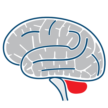 Icon representing the structure of a brain. Ideal for neurological and institutional materials Illustration