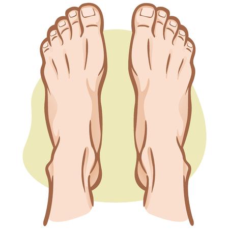 Persona de la ilustración, par de pies humanos, caucásico, vista superior. Ideal para catálogos, guías informativas e institucionales