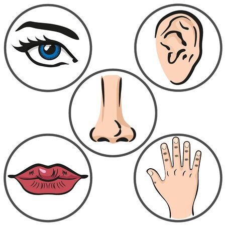 Illustration close up five senses, caucasian person. Sight, hearing, smell, taste, touch