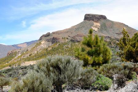 volcanic landscape: El Teide national park at Tenerife (Spain). Typical volcanic landscape and vegetation.