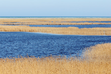 mecklenburg  western pomerania: Darsser Ort at Baltic sea beach on Darss peninsula (Mecklenburg-Vorpommern, Germany). Typical landscape with reed and water.