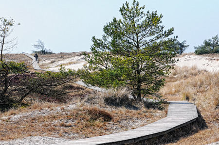 mecklenburg  western pomerania: Darsser Ort at Baltic sea beach on Darss peninsula with typical sand dune landscape and pine tree. Stock Photo