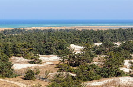 mecklenburg  western pomerania: Darsser Ort at Baltic sea beach on Darss peninsula (Mecklenburg-Vorpommern, Germany). Typical landscape with dunes and pine tree.