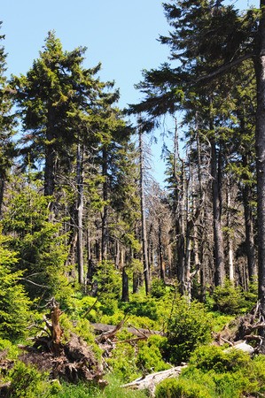 sustained: typical resin mountain forest with grass and dead tree after storm. Stock Photo