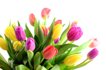 Bunch of tulips on white background Stock Photo