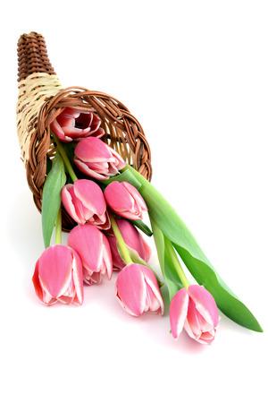 cornucopia: tulipanes de color rosa en un cuerno cuerno de la abundancia.