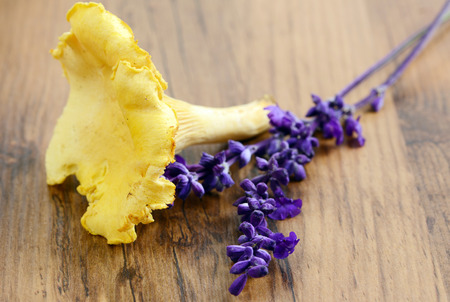 golden chanterelle: golden chanterelle mushrooms with sage flower
