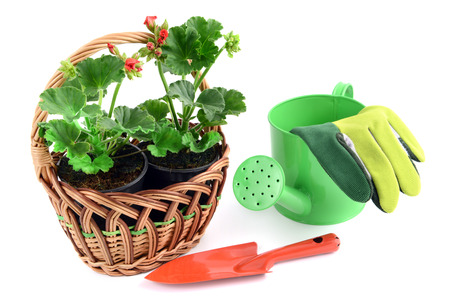 gardening gloves: basket with geranium flower. aside a small garden shovel and gardening gloves