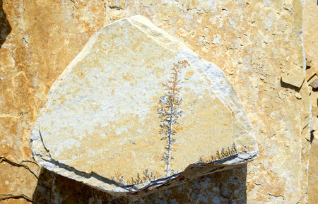 limestone with Manganese dendrites