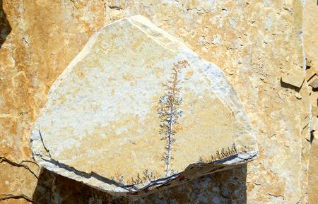 dendrites: limestone with Manganese dendrites