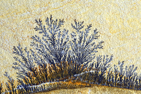 dendrites: Dendrite in limestone rock. found in solnhofen (Germany)