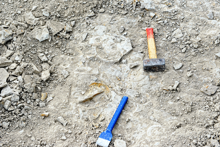 paleontologist: searching for ammonites in limestone.chisel and hammer aside.