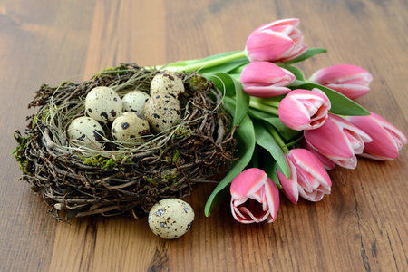 Quail Easter eggs in nest with bunch of pink tulips wooden background.