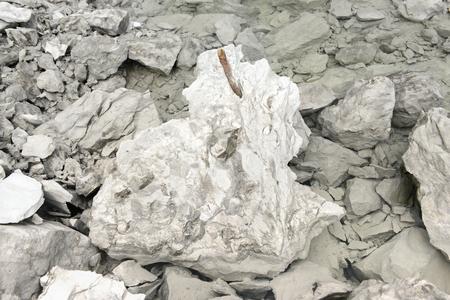 Belemnite fossils in chalk rock. quarry.