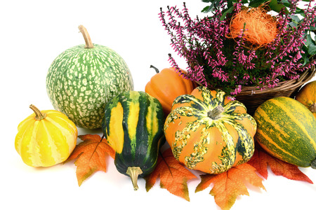 flower pot of heather with mini pumpkins on isolated white background. Halloween. Stock Photo