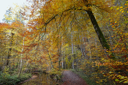 walking along path in autumn time. stream and beech tree aside. Stock Photo
