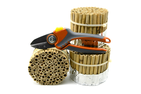 building an insect hotel with reed and bamboo sticks with garden shears on white isolated background. wild bee protection