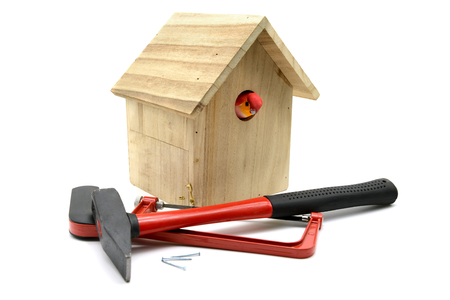 building bird nesting box with hammer, nails and saw. bird looking out of nestbox. white isolated background