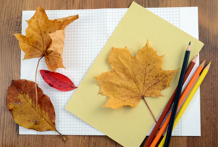 tinker autumn decoration of maple leaves. painting leave shape on paper with crayons.