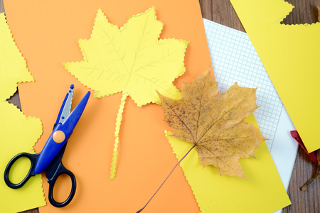 tinker autumn decoration of maple leaves. cutting out shape of maple leave with scissors.