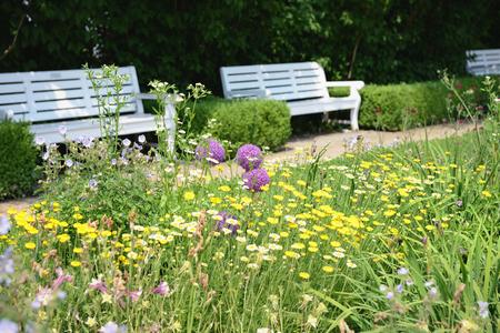 Garden with park bench and flowerbed of golden marguerite (Anthemis tinctoria)