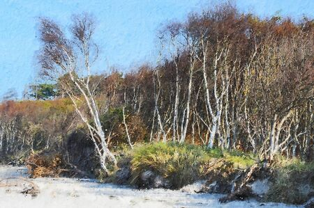 birch tree forest on coast beach at Weststrand on Darss peninsula. oil painting. 스톡 콘텐츠