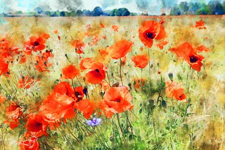 Watercolor painting of poppy field at havelland geion in germany.
