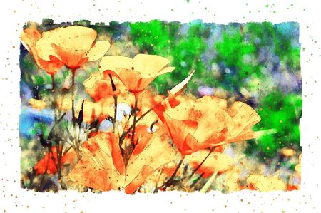 Watercolor painting of orange California poppy flower blossom in summer time.