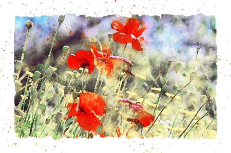 Watercolor painting of poppy flower blossom in summer time. frame with dots.