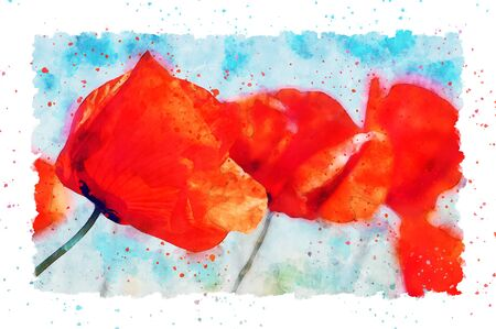 Watercolor painting of detail poppy flower blossom in summer time. frame with dots. 스톡 콘텐츠