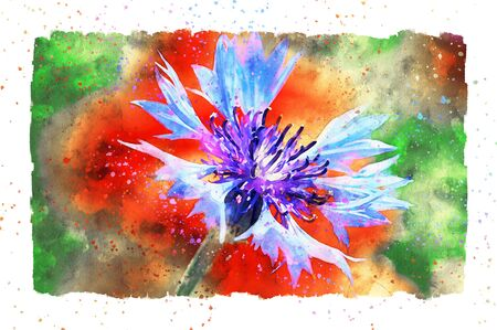 Watercolor painting of poppy flower and corn flower blossom in summer time. frame with dots.