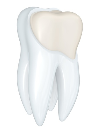 Tooth structure isolated on a white bacground Stock Photo - 8316601