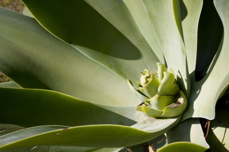 contrasting: A centre of a succulent green plant with contrasting shadows creating abstract shapes Stock Photo