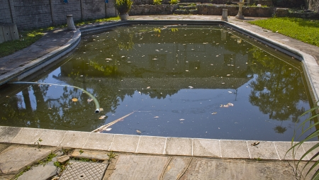 neglect: A home swimming pool that has turned dark green from neglect