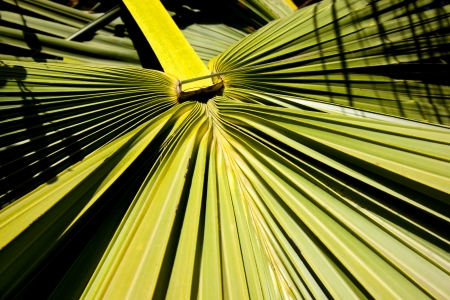 palm lined: An abstract closeup of a section of a leafy palm frond Stock Photo