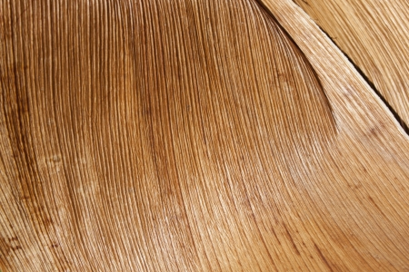 palm frond: Un primo piano astratto di una sezione di una fronda di palma di legno con una trama lineare