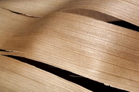 palm frond: Un closeup astratta di una sezione di un palmo di legno strappato fronda con una trama lineare