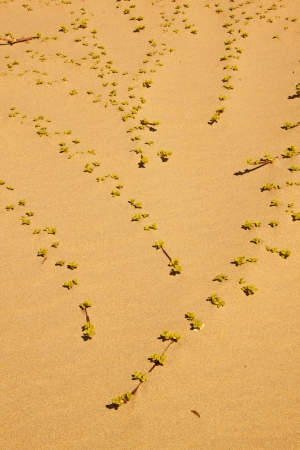 relocating: Dune vegetation in its coastal environment