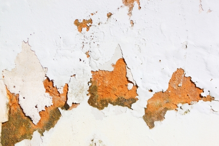 mustiness: Peeling paid on wall due to rising damp