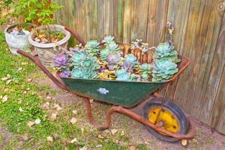Wheelbarrow filled with succulent desert roses and plants Stock Photo