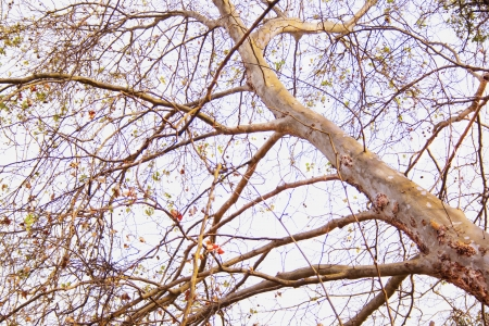 bedraggled: Close up abstract view of tree reaching skyward