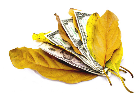 frugal: concept money doesnt grow on trees dollar bills and leaves