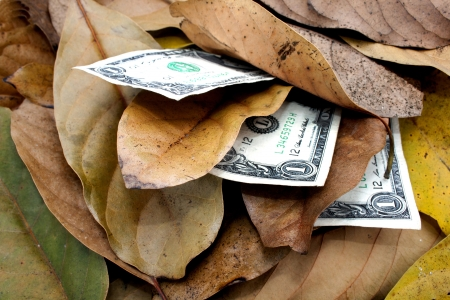 concept money doesnt grow on trees dollar bills and leaves photo