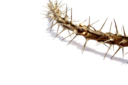 close up of branch covered in spiky thorns