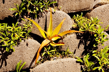 linker: small aloe plant growing from gap in linker brick retaining wall Stock Photo