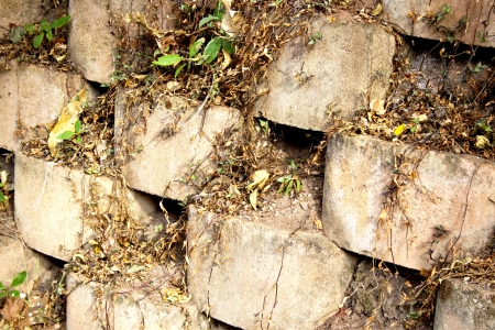 linker: plants fighting for surviving in gaps of linker brick retaining wall
