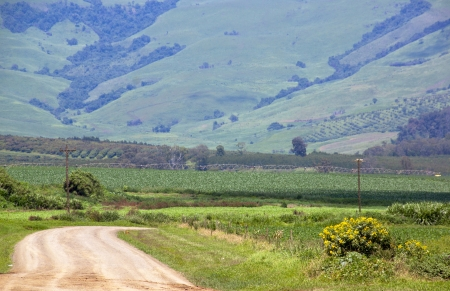 winding farm road with irrigation system in corn field photo